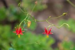 botanic_twoblue-25