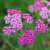 botanic_twoblue-50