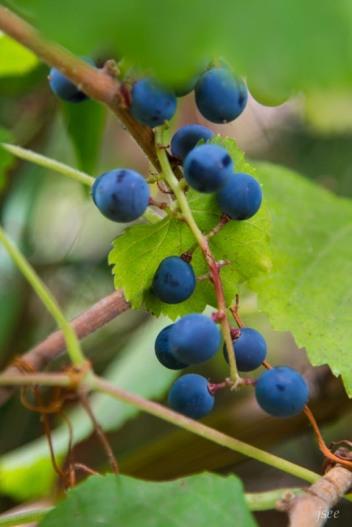 botanic_twoblue-51