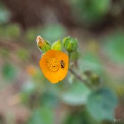 botanic_twoblue-53